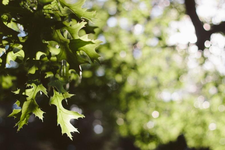 Dappled light through the trees
