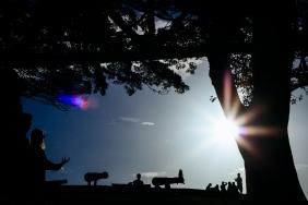 #s_daysingle - Silhouettin' Sydney Rachael Willis - the bowerbird girl