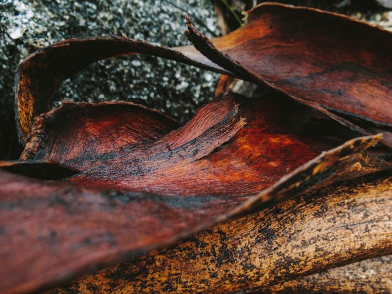Rachael Willis - the bowerbird girl - TPP nature - plants - bark 2