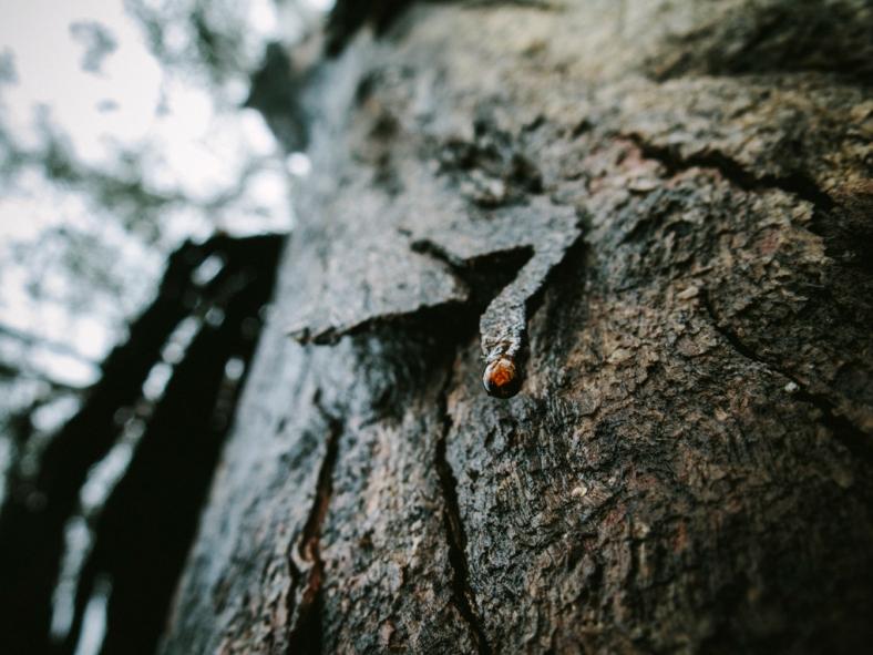 Rachael Willis - the bowerbird girl - TPP nature - treedrop