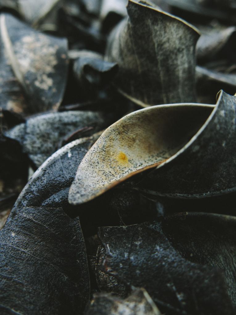 Rachael Willis - the bowerbird girl - TPP nature - fallen leaves