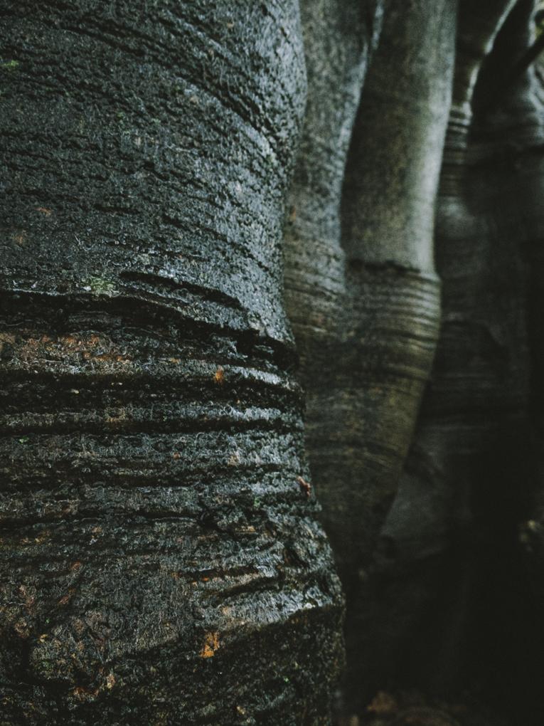 Rachael Willis - the bowerbird girl - TPP nature - sculpted fig